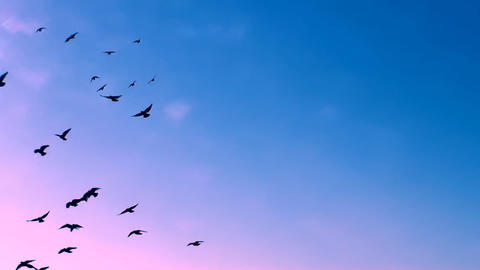 FLYING FLOCK OF BIRDS IN THE MAGICAL SKY FULL HD stock footage