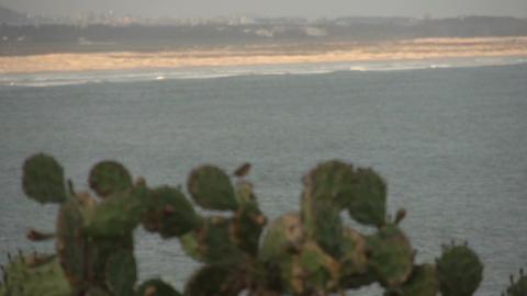 094 Laguna , Santa Marta village , cactus with bir Footage