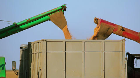 Harvesters Are Unloading Grain Into The Truck. Clo stock footage