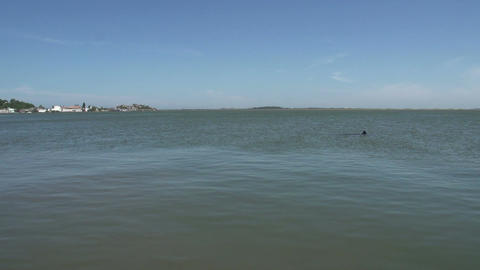 0135 Laguna , Lake view , dolphin comes to surface Stock Video Footage