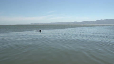 0137 Laguna , Lake view , dolphin comes to surface Footage