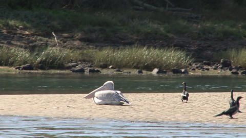 Lake in South Africa, pelican Stock Video Footage
