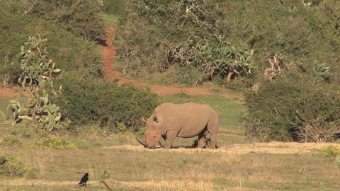 Rhinos Footage