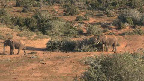 Big group of elephants at pond Stock Video Footage