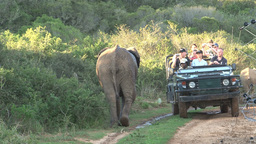 Elephant passing 4wd car with tourists Stock Video Footage