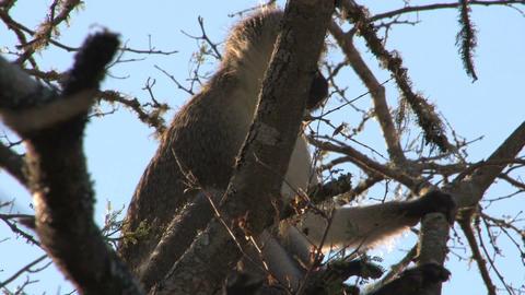 Monkey in tree Footage