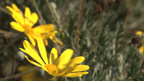 Flowers Stock Video Footage