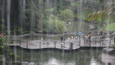 People Feed The Birds At The Zoo In The Rain stock footage