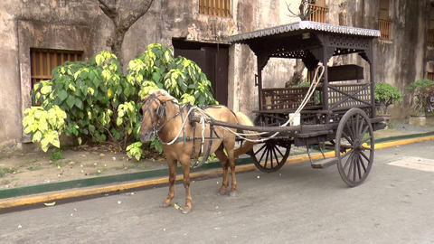 horse drawn carriage Footage