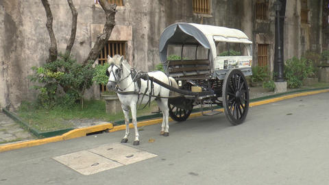 horse drawn carriage white Stock Video Footage