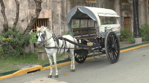 horse drawn carriage white Footage