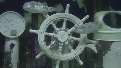 ships helm underwater Footage
