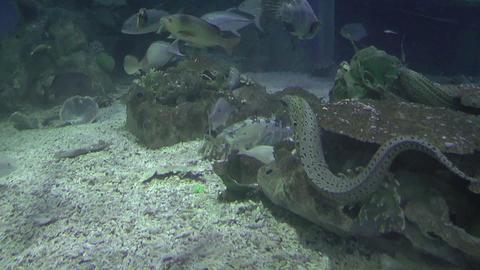 park aquarium Stock Video Footage