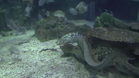 park aquarium Footage