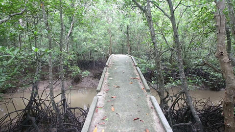 bridge over a stream in the mangroves Stock Video Footage