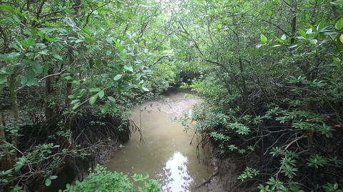 stream flows of the root system of mangroves Footage