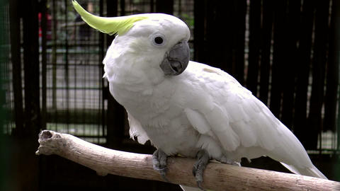 white parrot Stock Video Footage