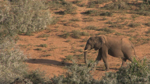 Elephant passing by Footage
