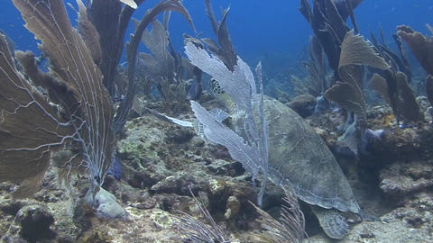 Reef and turtle Stock Video Footage