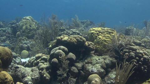 Reef in Bonaire Stock Video Footage