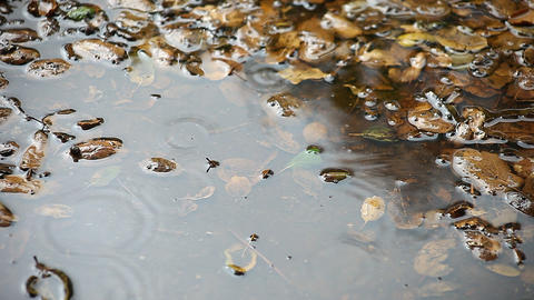 rain puddle with leaves Footage