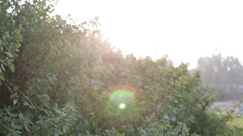 green bushes at dawn backlit Stock Video Footage