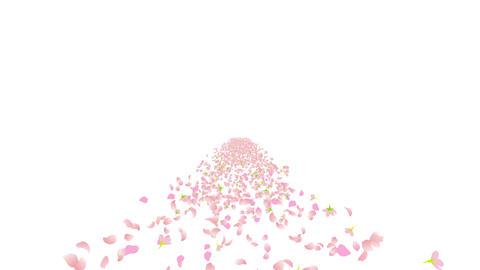 cherry blossom road B 2 4k Stock Video Footage