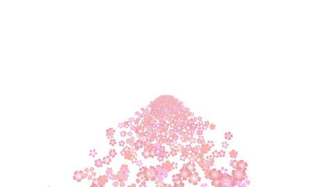 cherry blossom road B 1 4k Stock Video Footage