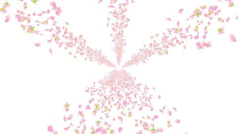 cherry blossom road B 7 4k Stock Video Footage