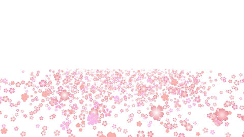 cherry blossom space A 1 4k Stock Video Footage