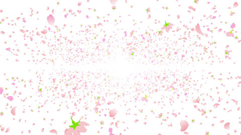 cherry blossom space A 4 4k Stock Video Footage