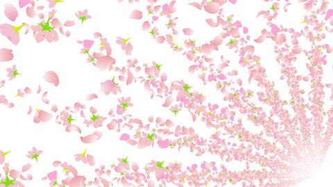 cherry blossom tunnel BG 2 4k Stock Video Footage