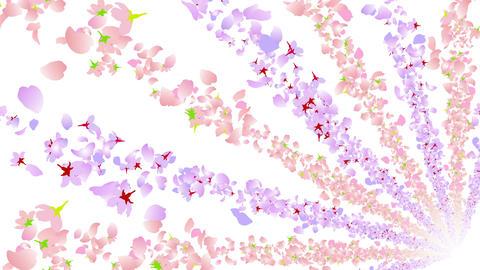 cherry blossom tunnel BG 3 4k Stock Video Footage