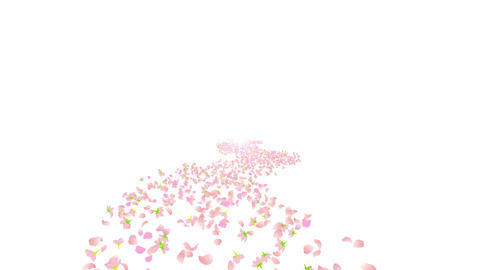 cherry blossom tunnel C 2 4k Stock Video Footage