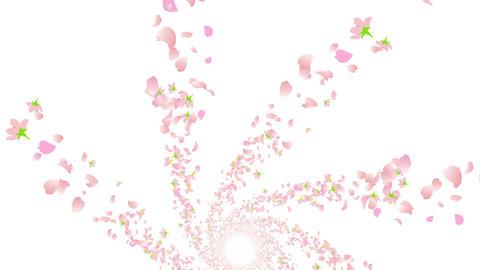 cherry blossom tunnel DG 2 4k Stock Video Footage