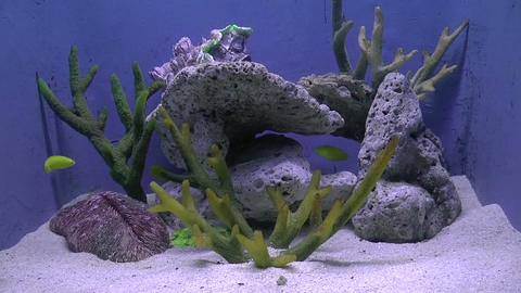 yellow wrasse Stock Video Footage