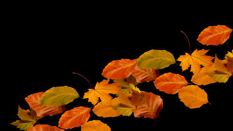 autumn leaves falling from left to right alpha Stock Video Footage