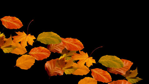 autumn leaves falling from right to left alpha Stock Video Footage