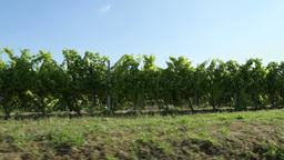 On Board Sunset Panoramic Vineyard Landscape Umbri stock footage