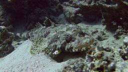 Crocodile fish Stock Video Footage
