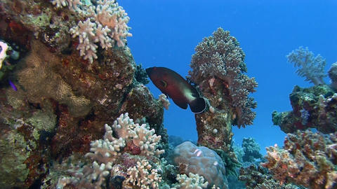 Reef at blue clear water Stock Video Footage