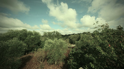 Time Lapse Clouds Over Olive Trees In Apulia Italy Footage