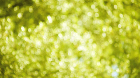 Yellow Green Leaves Soft Focus stock footage