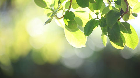 backlit leaves background ライブ動画