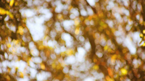 Autumn Leaves Soft Focus stock footage