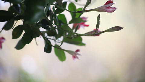 leaves , flowers in a breeze Footage