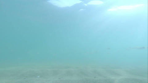 Group of small fish in sunray Footage