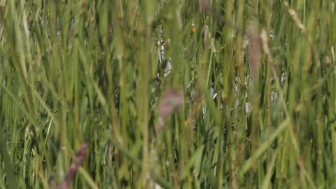 seagull hid in grass a breeze on the sea coast Footage