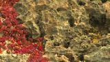 HD2009-4-8-23 Lava Rock stock footage