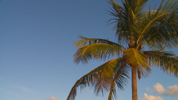 HD2009-4-9-6 palm tree Stock Video Footage